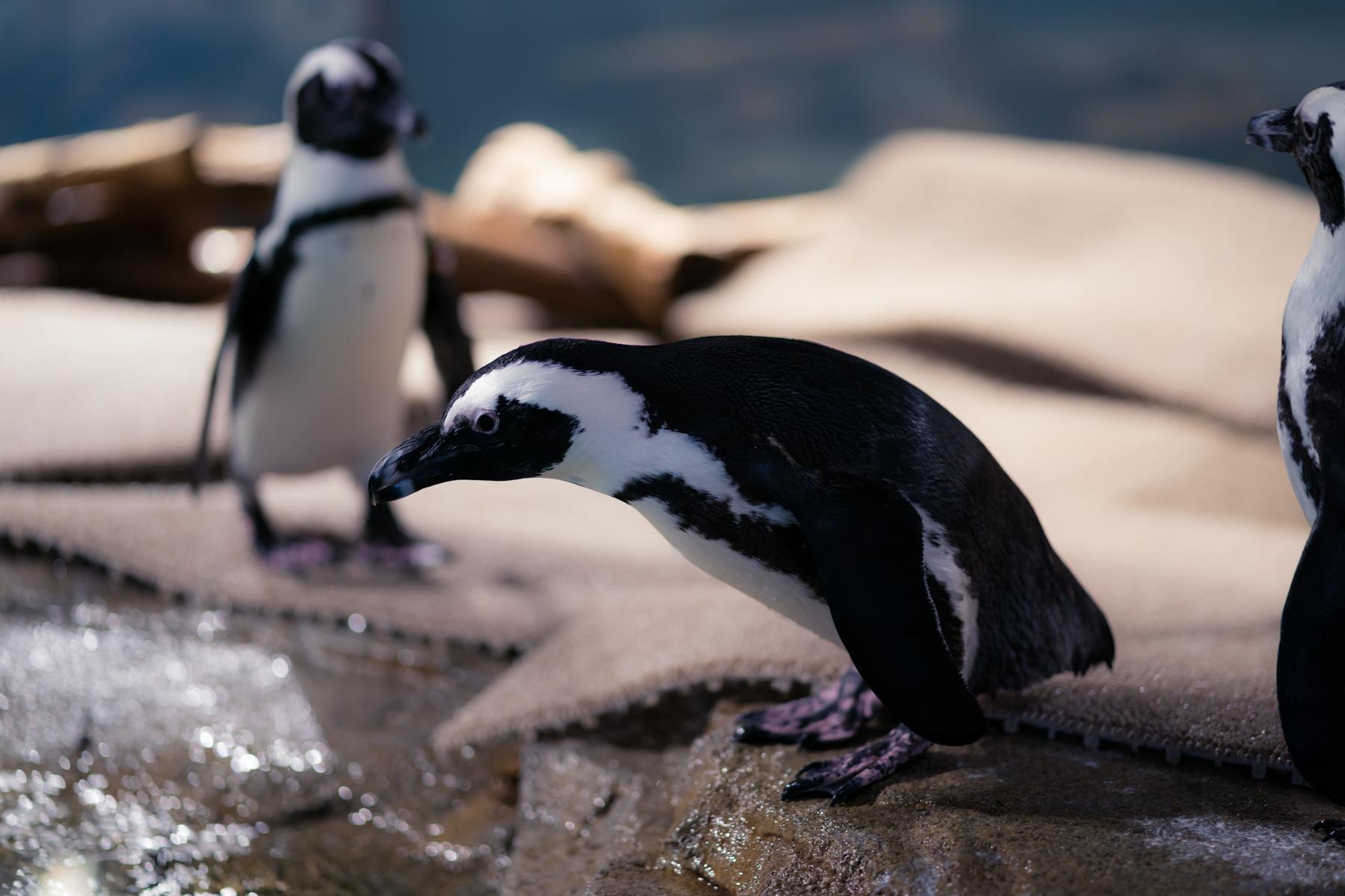 ニフレル ペンギン