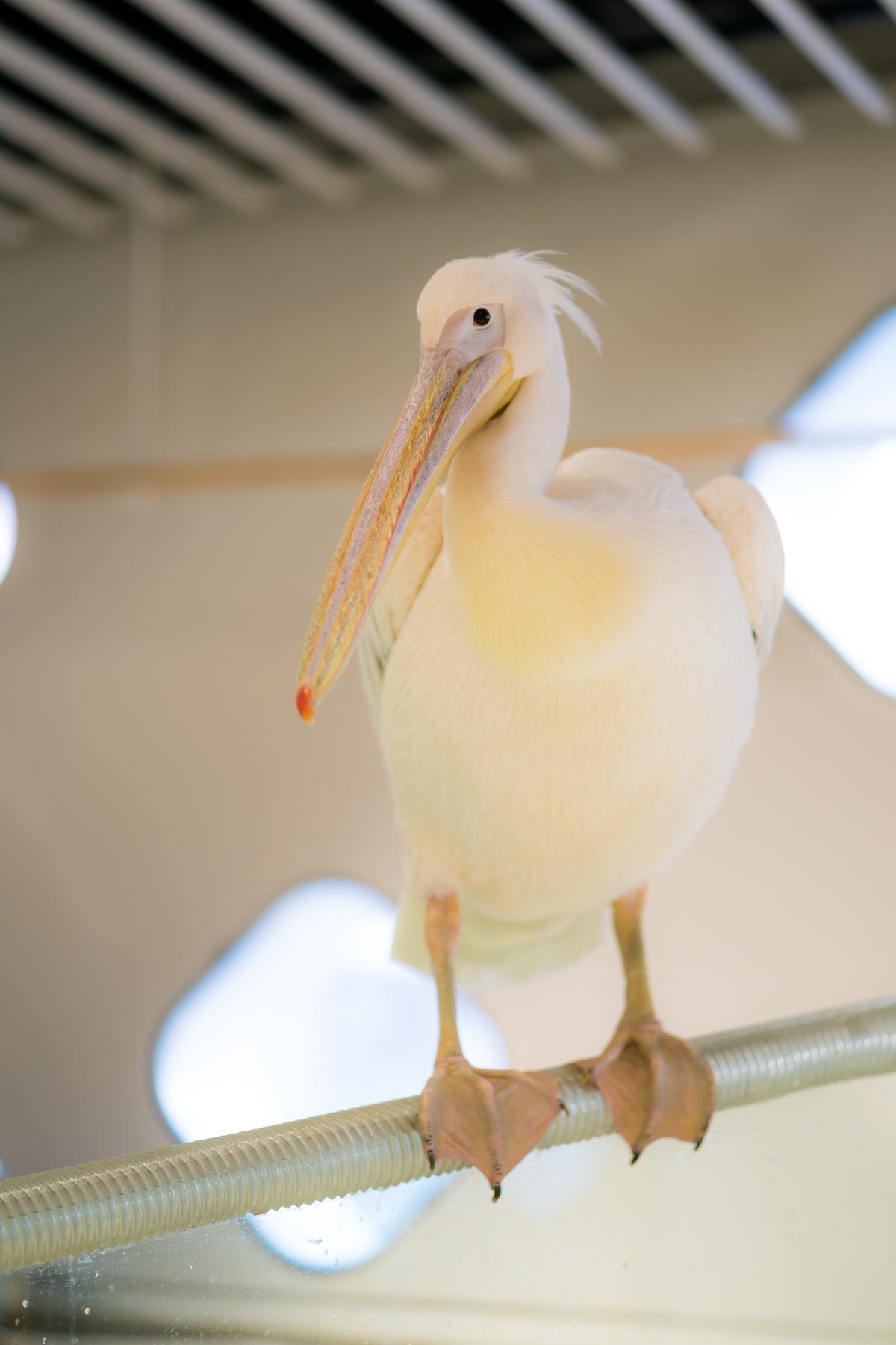 ニフレル 鳥