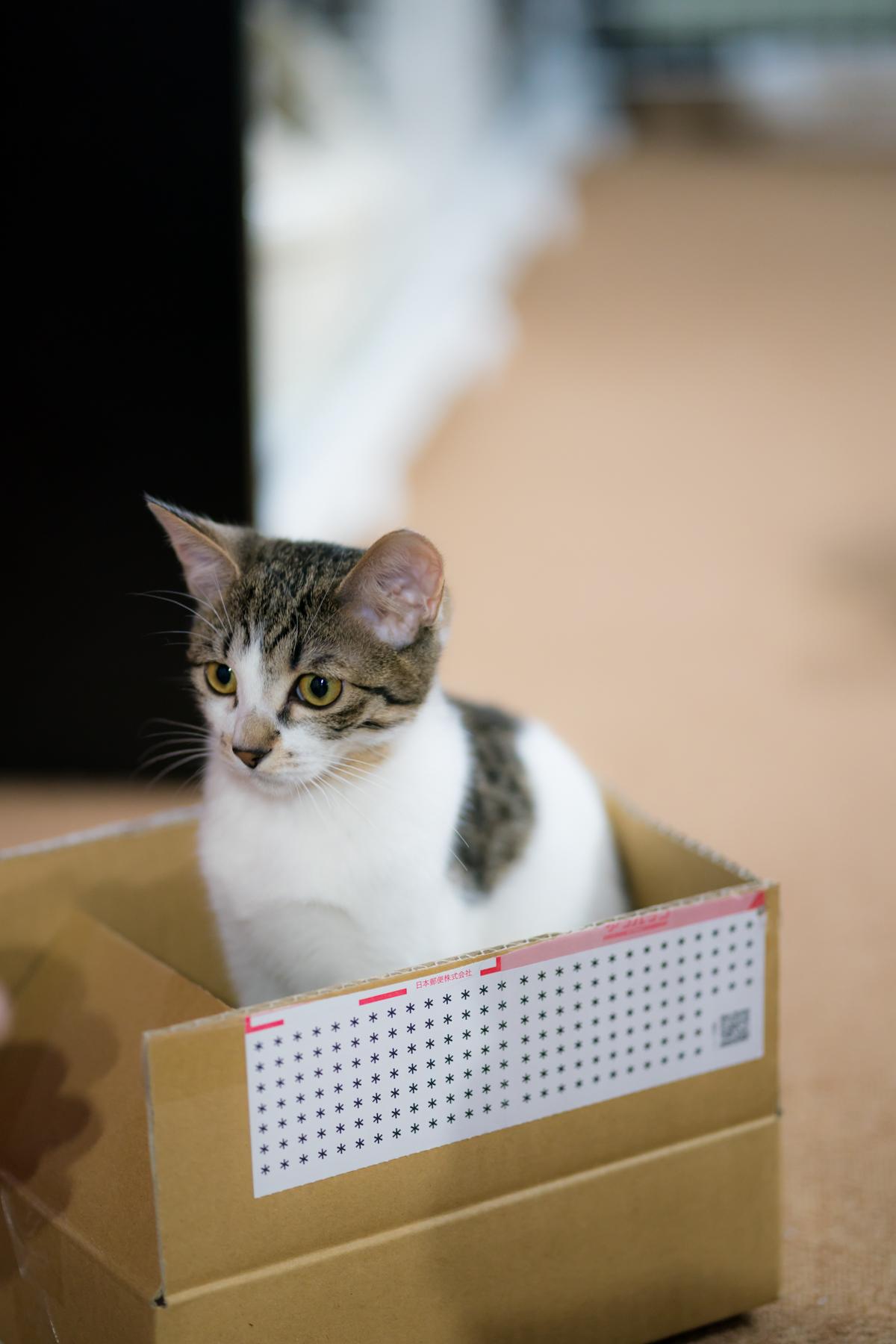 SONY α9 ILCE-9 猫 写真