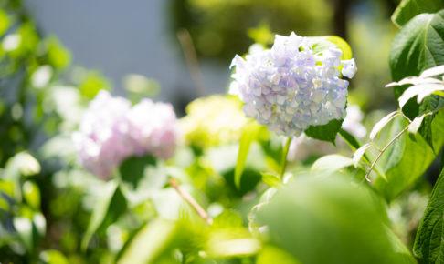 花 スナップ