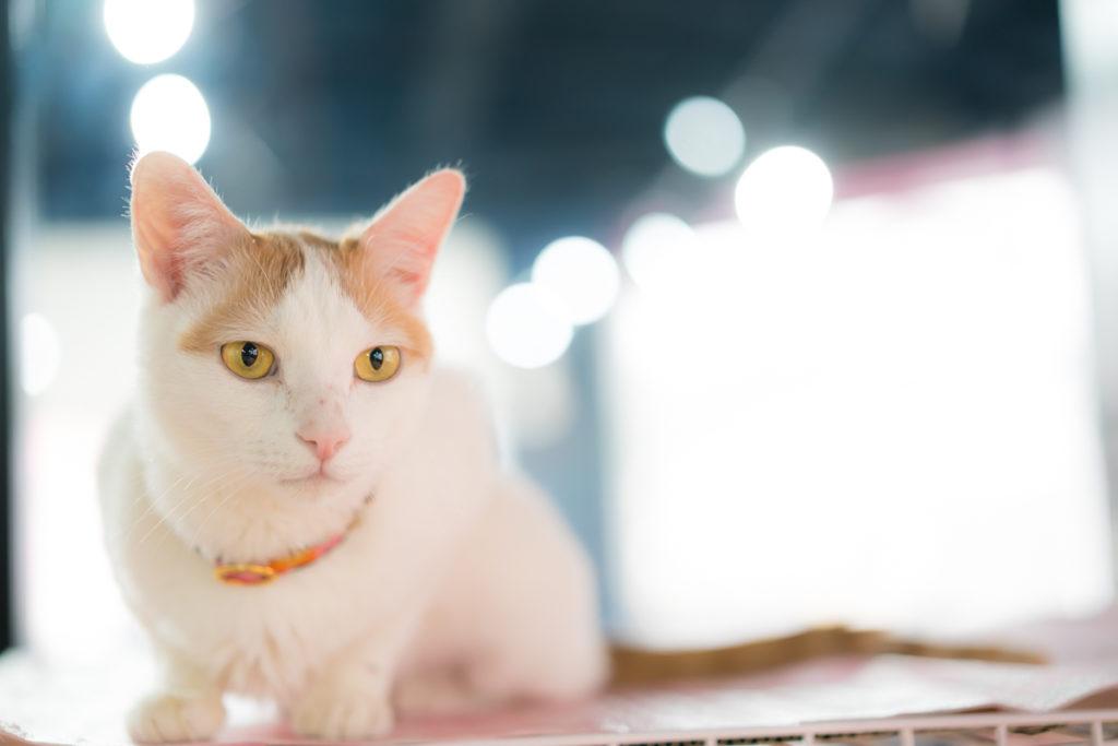 猫 スナップ